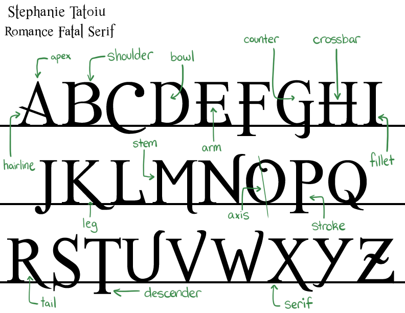 Typography Anatomy Related Keywords Typography Anatomy