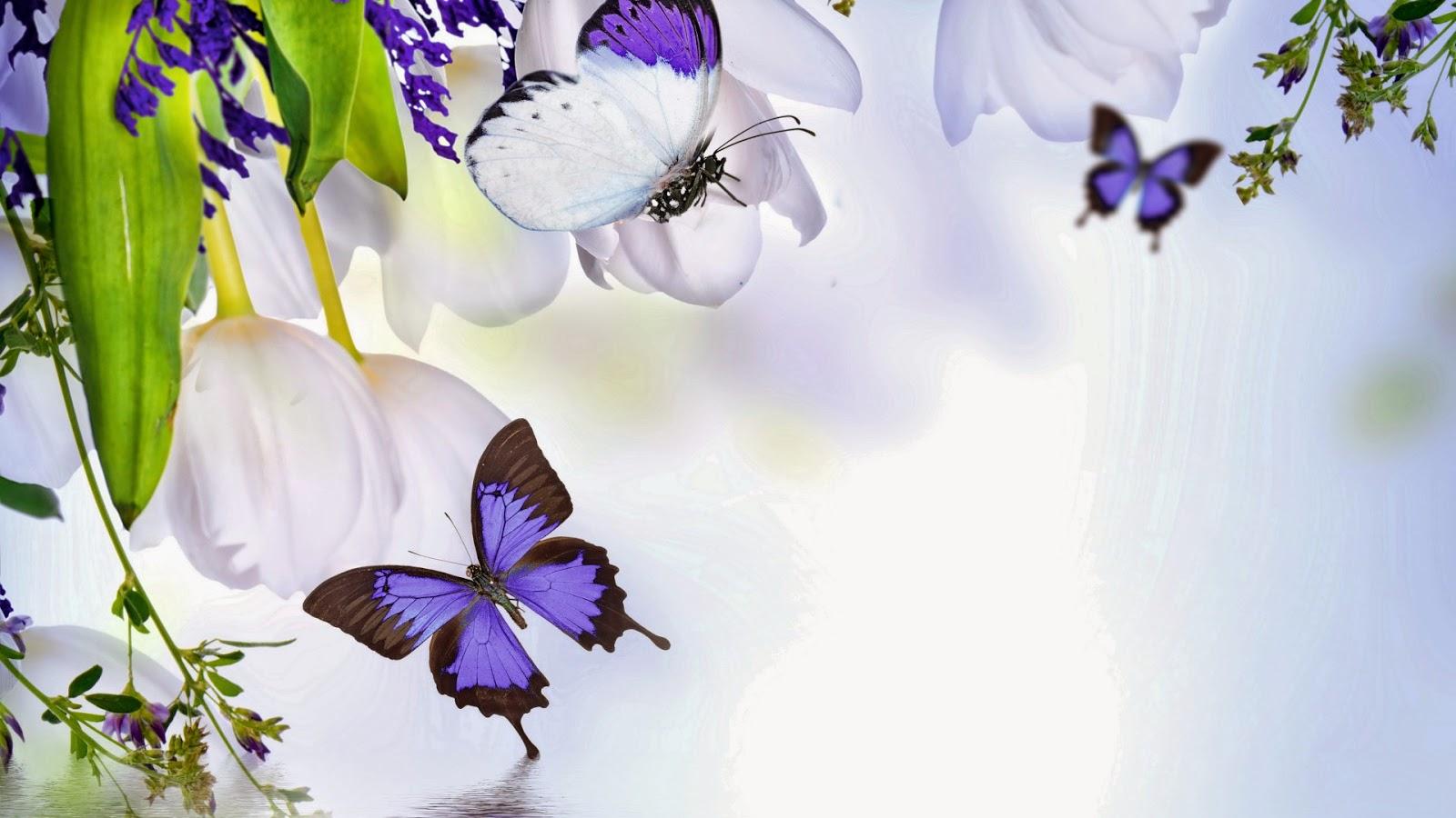Mariposas y Flores de Colores