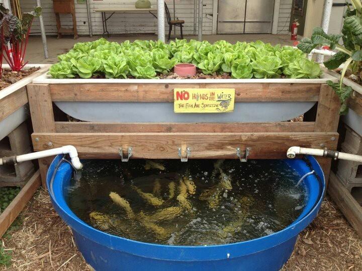 Reciclar reutilizar y reducir criar peces y cultivar Como cultivar peces en casa
