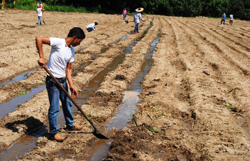 Centro acu cola y agroindustrial de gaira regional for He firmado acuerdo clausula suelo
