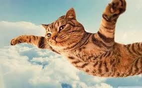 Kucing Terbang