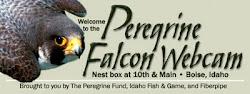 Boise Falcon Cams