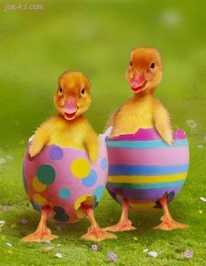 http://1.bp.blogspot.com/-Rkf7-dsfwNE/TaSG_bvxQxI/AAAAAAAAAfY/ZN4QLkrQbdE/s1600/ducklings+in+colored+eggs.jpg