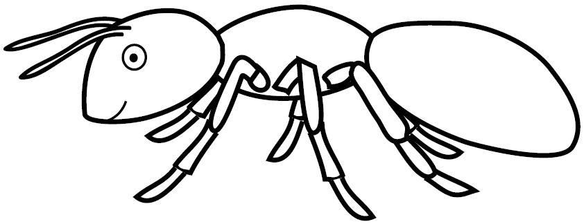 Dibujos De Hormigas Reales | www.imagenesmy.com