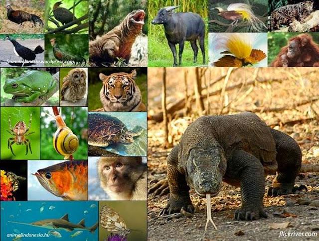 Keanekaragaman Hayati Indonesia