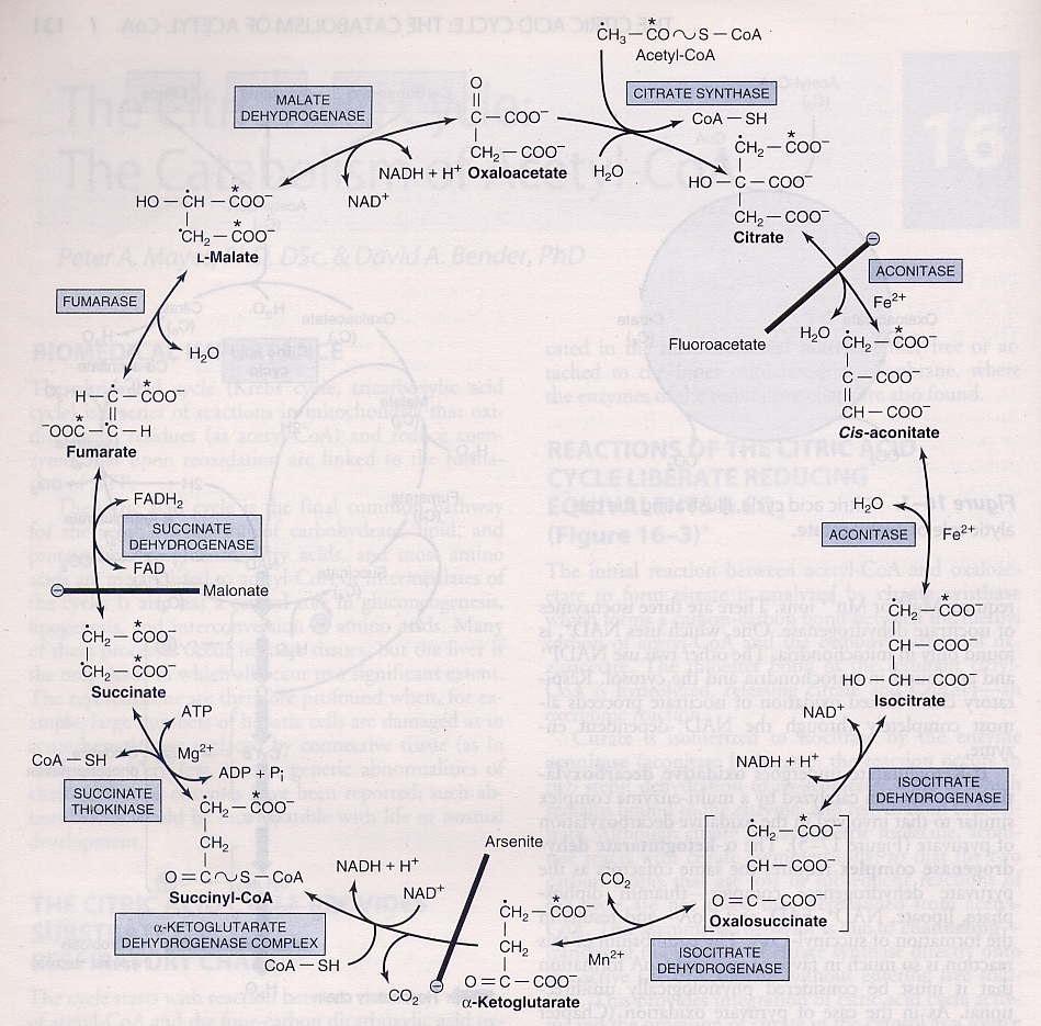 E-Book Metabolisme Lemak
