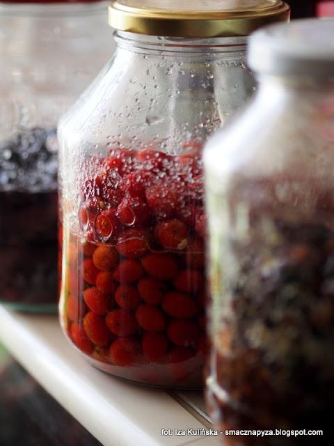 różanka , dzika róża , owoce dzikiej róży , róża psia , alkohol , wyroby domowe , spiżarnia , przetwory , spirytus , wódka owocowa , naleweczka , nalewki , domowe wyroby , najlepsze przepisy