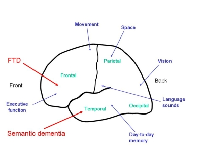 Brain Functions Diagram3