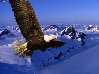 download lovely eagle flying over snow mountains hd wallpaper 2013