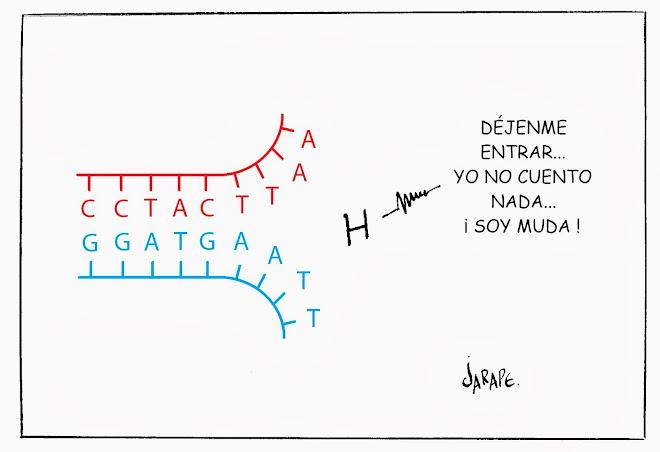 H y ADN