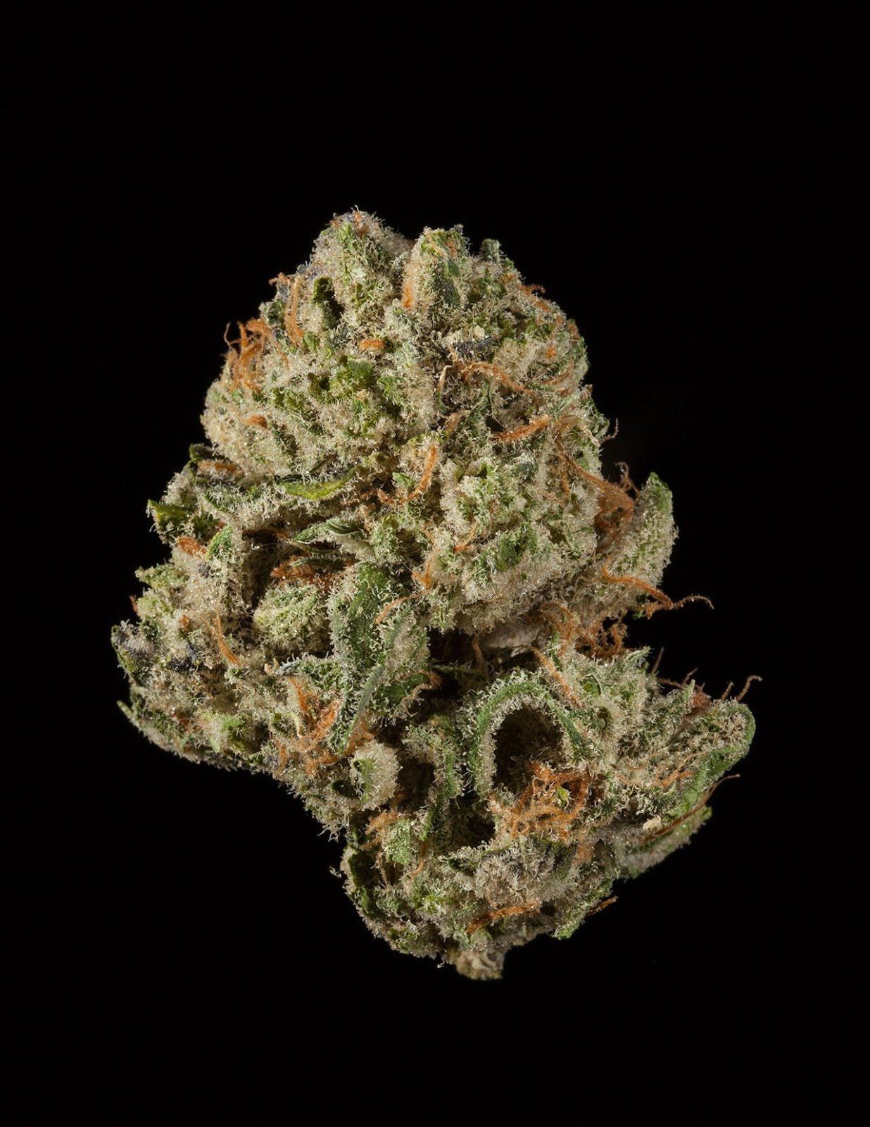 White Rom  #CannabisCup2015