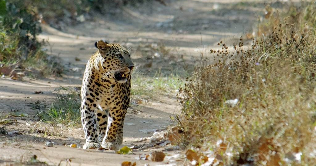 Jambughoda India  city pictures gallery : Jambughoda Wild Park of Gujarat | India Tourism