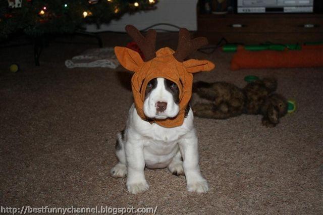 Funny puppy.
