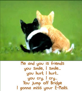Funny cat sayings me and you is friends