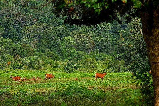Alas Purwo Daftar Tempat Wisata Jawa Timur