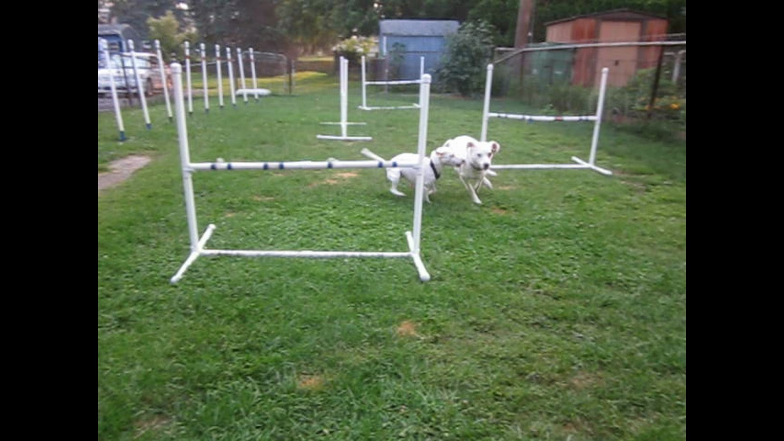 Yard Set Up With Jumps And Weaves