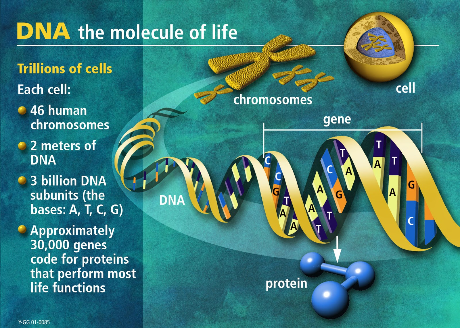 a description of the dna and its use in the modetn forensic world Don't just sit there scratching your head, find useful info on effective work habits on ehow get essential tips and learn more about everything from how to make an.