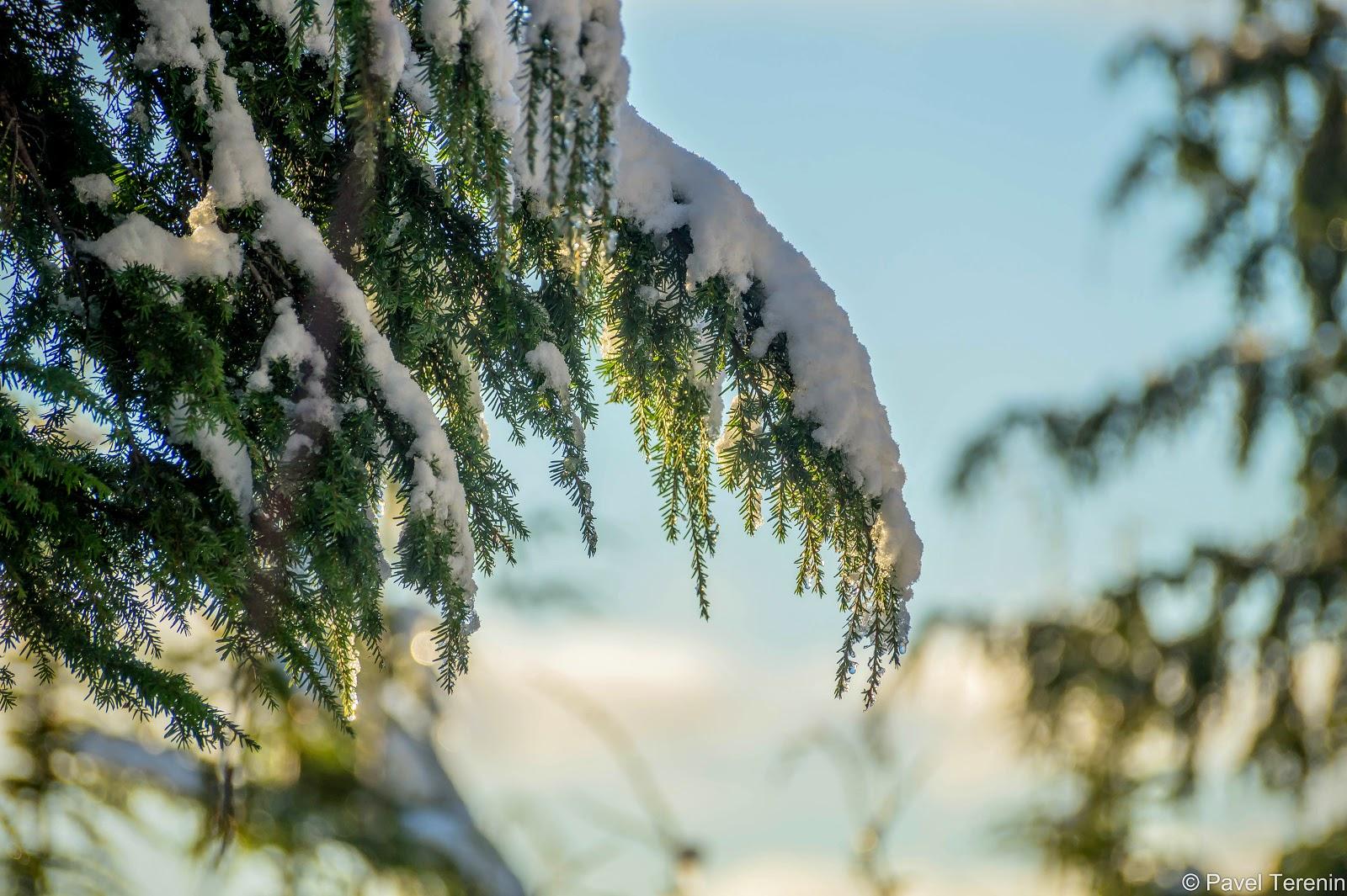 снег искрится будто россыпь миллионов крошечных алмазов.