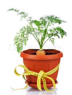 Cara Menanam Wortel di Dalam Pot