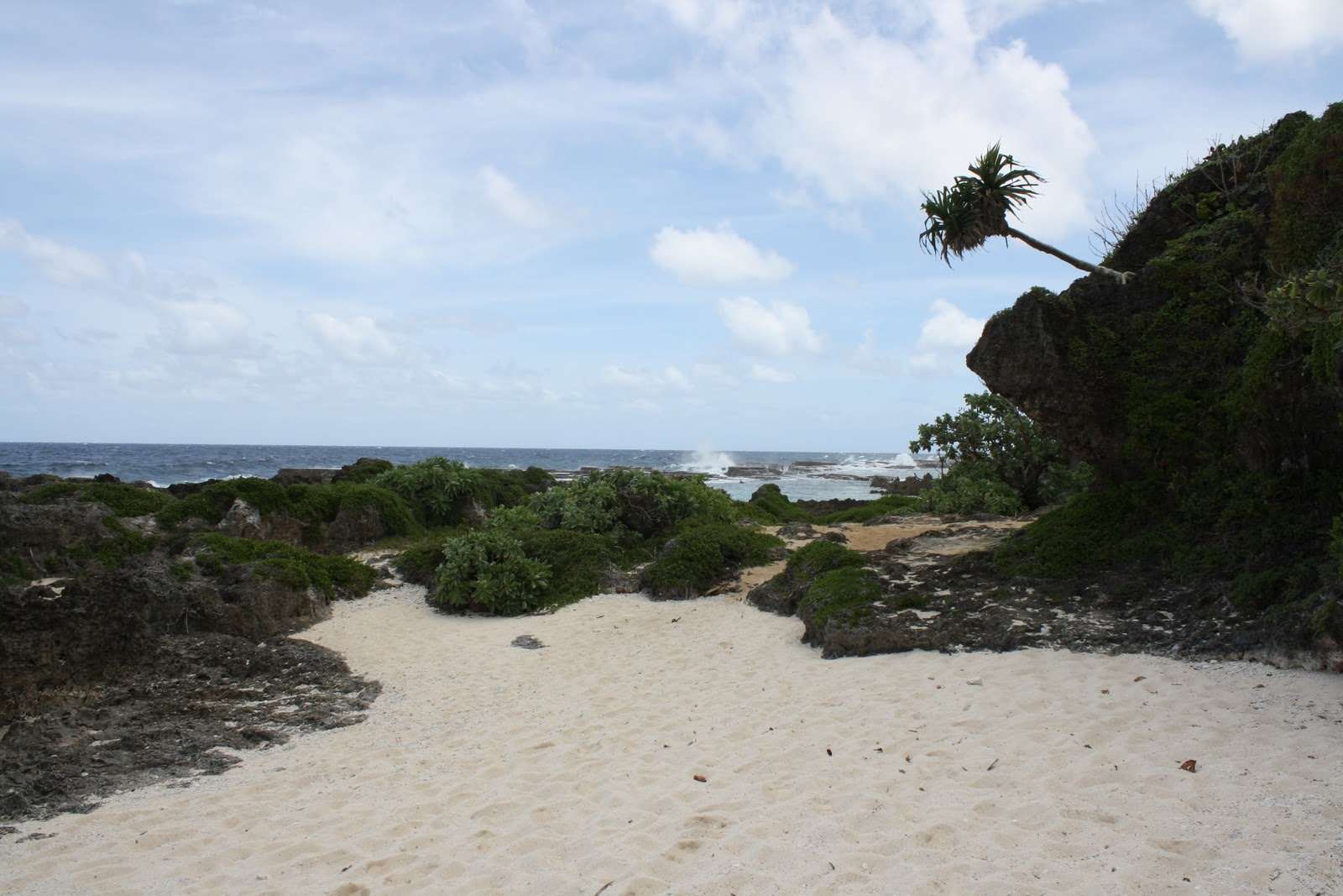 Melissas adventures in tonga my must dos on tongatapu with lush vegetation that add even more to the beauty of the place and provide a shady spot to sit most times of the day a great place for a picnic sciox Images