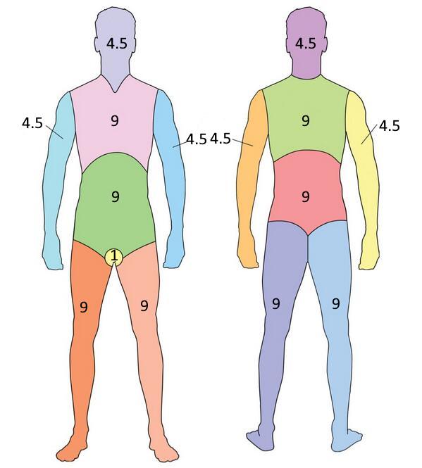 B.log.ia 2.0: El sistema tegumentario