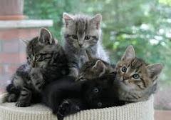 <<<---Katzen--->>> <<<---Wollen--->>> <<--Auch Testen-->>