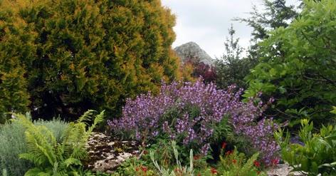 Disfrutar con el huerto y el jard n el jard n de rocas for Jardin umbrio
