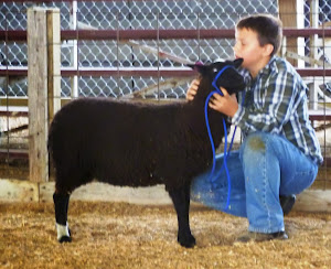 2012 1st place Yearling ewe