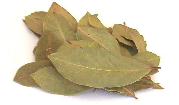 Resultado de imagen para hojas laurel