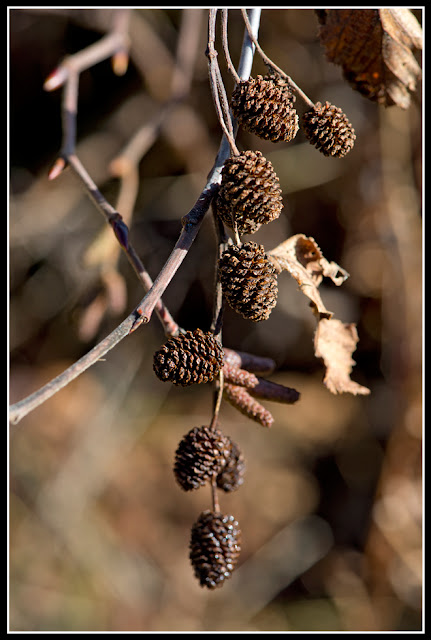 Nova Scotia; Garden; cones