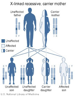 X-linked Recessive inheritance, by the National Institutes of Health (public domain)
