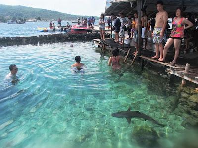 Wisatawan yang ingin berenang bareng hiu