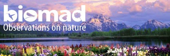The Biomad Blog
