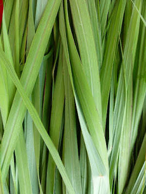 Lemongrass (Cymbopogon Citratus) Overview, Health Benefits, Side effects