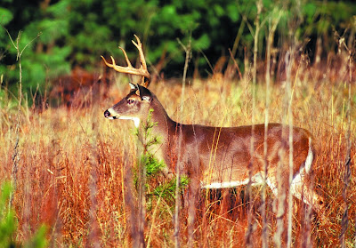Plan your Michigan hunting or outdoor adventure with Michigan DNR's Mi-HUNT