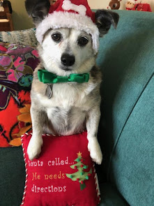 Pugsley (Now Corgi) dresses for holiday