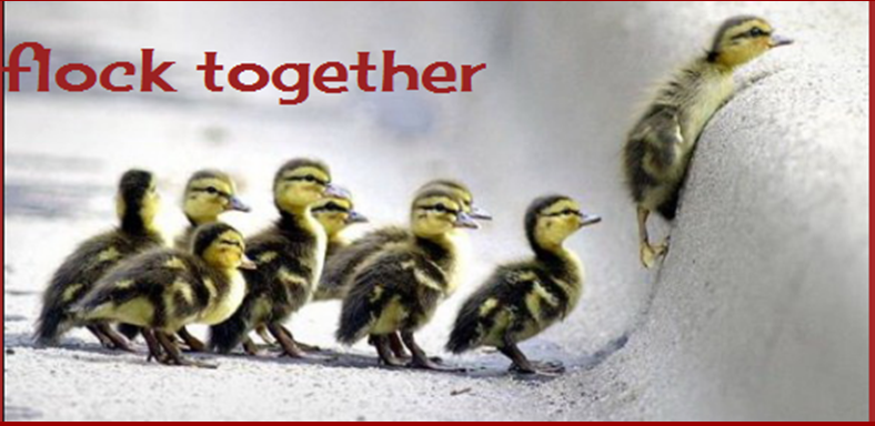 flock together