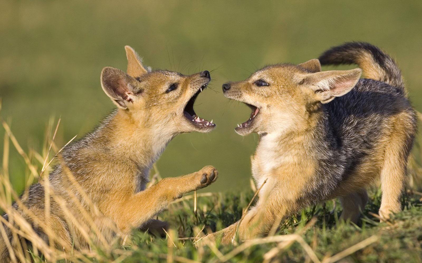 http://1.bp.blogspot.com/-Rs8nXtvaUOU/TjsA9Vyu_AI/AAAAAAAAC-s/lsxzVc6POM4/s1600/animals_wallpapers%2B%252814%2529.jpg