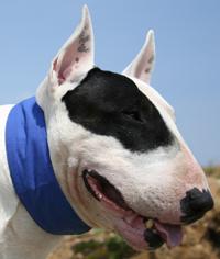 Kühl_Halsband_Hund