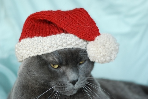Spindles and Spices: International Cat Hat: North Pole