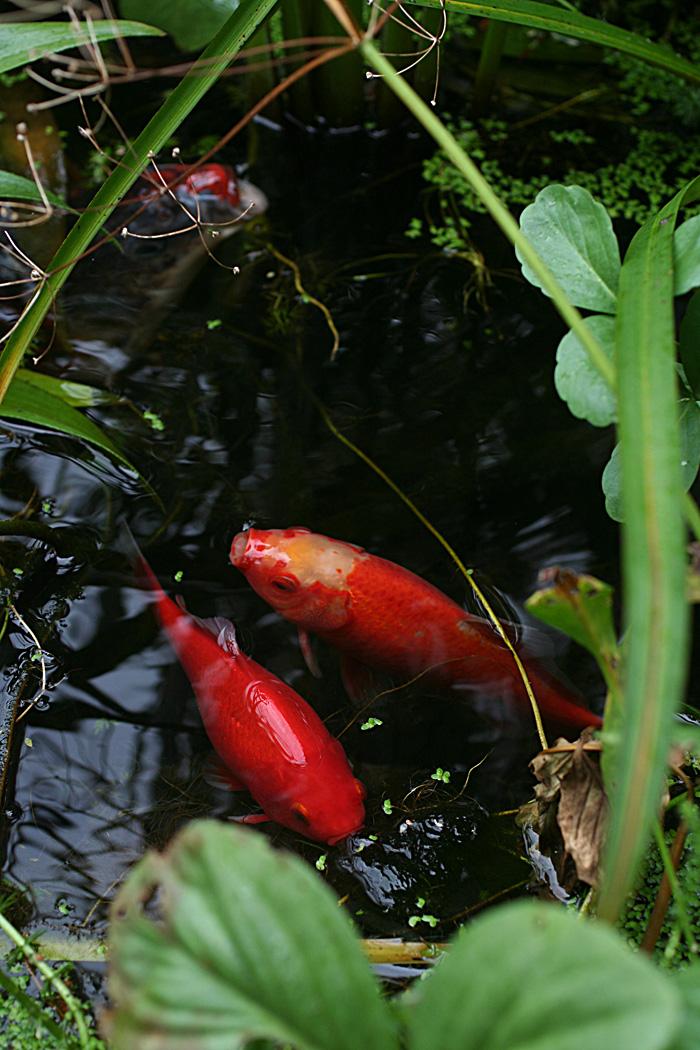 Wildwuchs unter aufsicht oktober 2011 for Was brauchen fische im teich