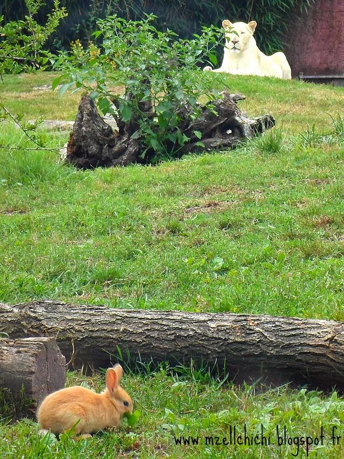 Zoo-Pessac-Lionne-Blanche
