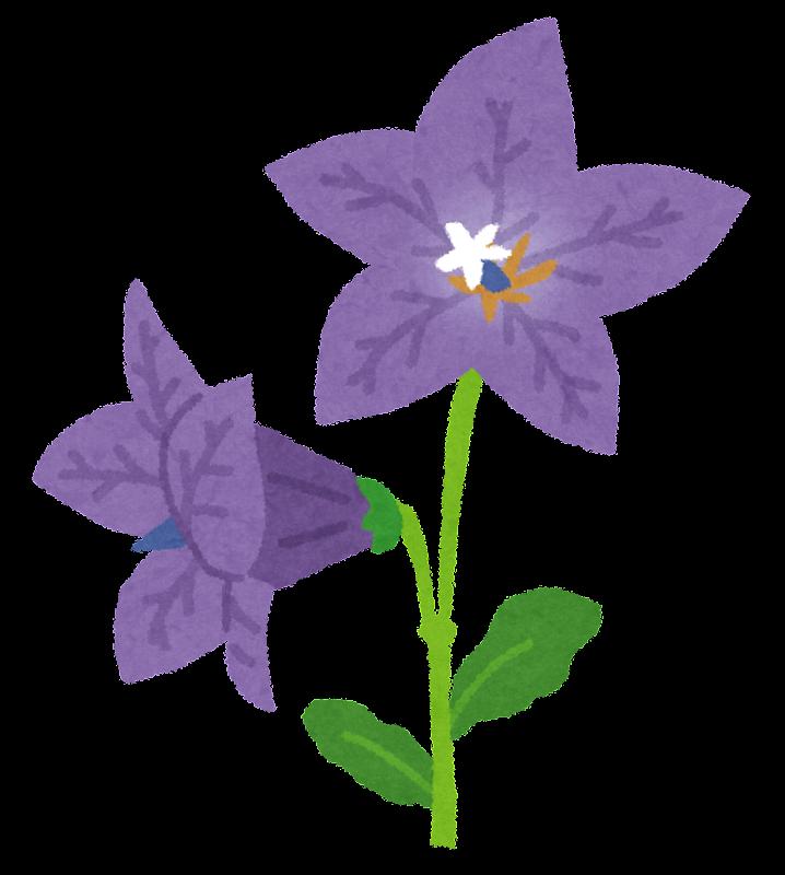 キキョウのイラスト(花) | かわいいフリー素材集 ...