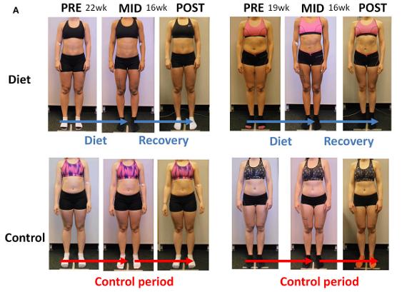 average body fat for women № 79565