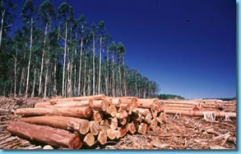 La Tala de bosques