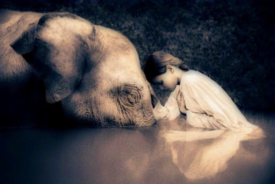 Este blog está en contra del maltrato animal