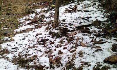 Snowfall in tiger hill