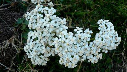 Informes de flora