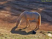 """Detall d'un els cavalls de Cal Flor. Autor: Francesc """"Caminaire"""""""