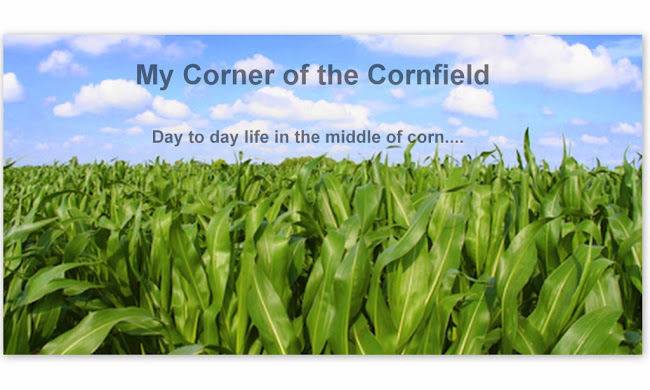 My Corner of the Cornfield